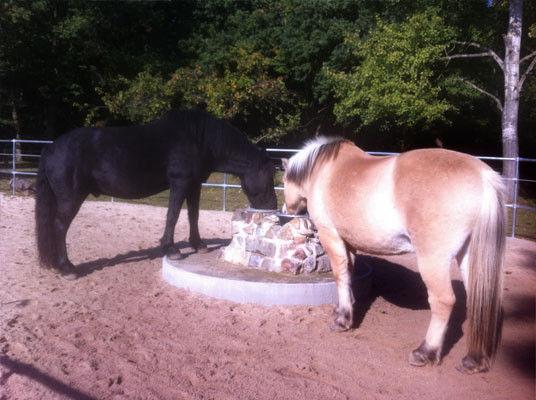 Artgemäße Pferdehaltung in der Aktivanlage – glückliche, Pferde ...